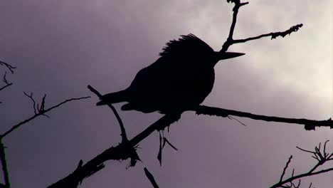A-silhouette-of-a-bird-perched-in-a-tree-with-a-stormy-sky-in-the-background