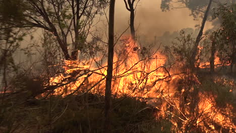 Forests-and-brush-burn-during-a-massive-wildfires-in-Australia