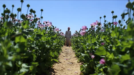 An-Arab-man-stands-in-opium-fields-during-harvest-season-1
