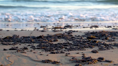 Tar-And-Oil-Collect-On-The-Beach-After-The-Massive-Beach-Cleanup-Effort-Following-The-Refugio-Oil-Spill