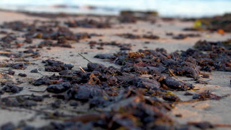 Tar-And-Oil-Collect-On-The-Beach-After-The-Massive-Beach-Cleanup-Effort-Following-The-Refugio-Oil-Spill-1