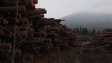 Snow-Falls-Lightly-And-Recently-Cut-And-Stacked-Lumber-Harvested-From-The-Nearby-Mountain