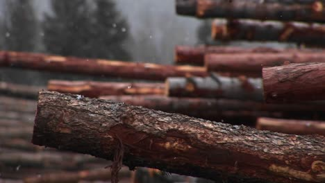 Light-Snow-Falls-On-A-Stack-Of-Cut-Logs