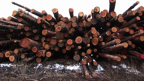 A-Closeup-Montage-Of-Newly-Cut-Lumber-With-Interesting-Mix-Of-Shapes-Hues-And-Colors