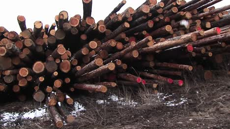 The-Camera-Pans-Stacks-Of-Cut-Logs-Of-Various-Lengths-Some-Marked-Red-On-The-Ends