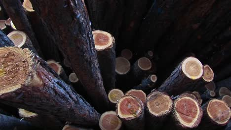 This-Closeup-Of-Cut-Lumber-Shows-The-Bark-And-Growth-Rings-Of-The-Stacked-Logs