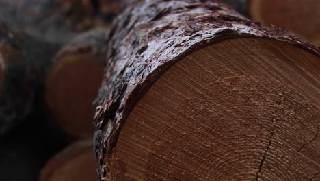 An-Extreme-Closeup-Of-Cut-Logs-With-Sawmarks-Rings-And-Bark