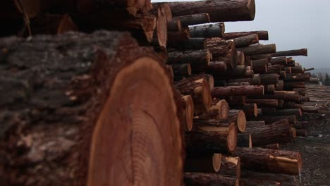 The-Camera-Pans-Down-For-Extreme-Closeup-Of-One-Log-In-A-Stack-Of-Newly-Cut-Timber