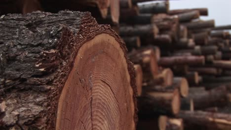An-Extreme-Closeup-Of-A-Log-In-A-Stack-Of-Cut-Timber
