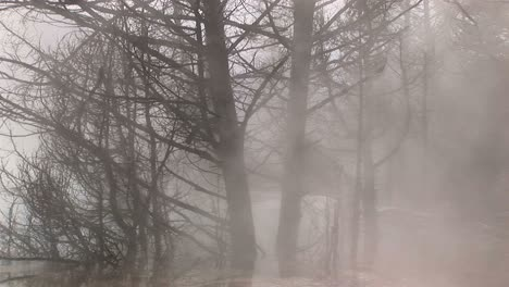 Heavy-Steam-From-A-Nearby-Hot-Springs-Envelopes-Winter-S-Bare-Trees