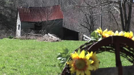Bright-Yellow-Sunflowers-Are-The-Only-Signs-Of-Life-Near-An-Old-Farmhouse-Whose-Roof-Is-On-The-Verge-Of-Collapse
