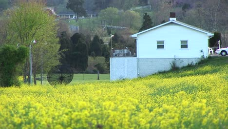 Bright-Yellow-Flowers-Surround-A-Satellite-Dish-Belonging-To-A-Home-Set-On-A-Hillside-Near-A-Rural-Highway