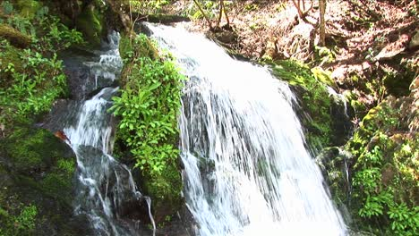 A-Rushing-Waterfall-Flows-Around-Lush-Vegetation