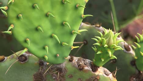 Extremecloseup-Of-The-Spines-Of-A-Texas-Cactus