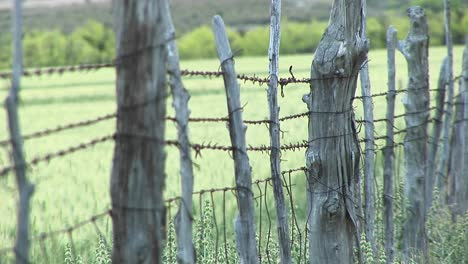 Closeup-Of-Barbedwire-Wrapping-Around-Cedar-Fence-Posts