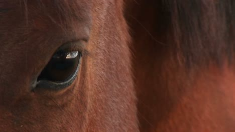 Extremecloseup-Of-A-Horse-S-Right-Eye
