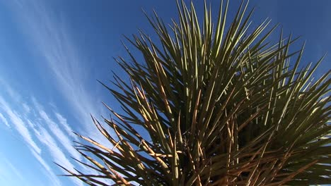 Closeup-Of-A-Joshua-Tree-Standing-In-Front-Of-A-Blue-Sky