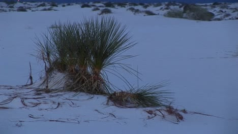 Mediumshot-Of-Terrain-In-The-White-Sands-National-Monument-In-New-Mexico