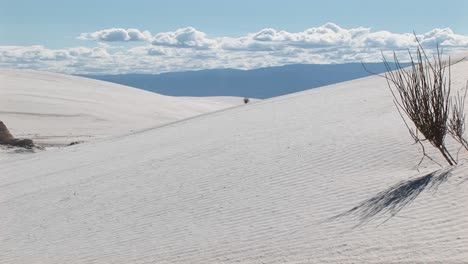 Panright-Of-Sand-Dunes-And-A-Scraggly-Plant-At-White-Sands-National-Monument-In-New-Mexico
