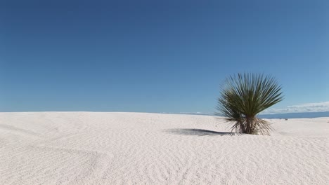 Longshot-Of-A-Plant-At-White-Sands-National-Monument-In-New-Mexico
