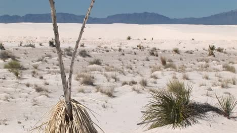 Panup-Of-A-Tall-Dry-Plant-At-White-Sands-National-Monument-In-New-Mexico