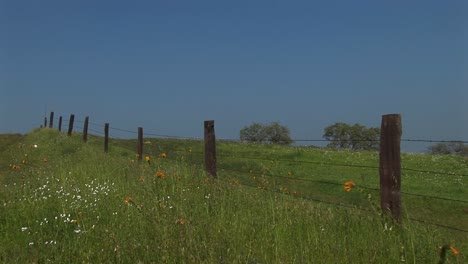Medium-Shot-Of-A-Fence-Line-In-A-Lush-Pasture-In-California
