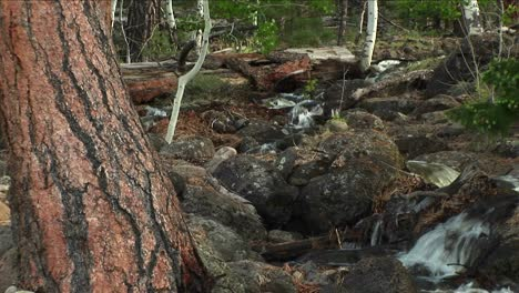 Medium-Shot-Of-A-Mountain-Stream-Flowing-Through-A-Forest-1