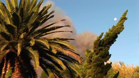 Closeup-Of-Trees-In-Front-Of-A-Billowing-Cloud-Of-Smoke-From-A-Wildfire-In-Southern-California