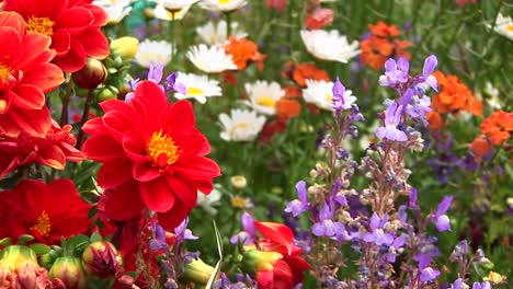 Closeup-Of-A-Variety-Of-Wildflowers-Swaying-In-The-Breeze-Of-A-California-Forest