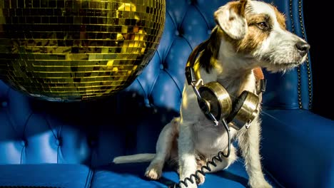 Dog-Gold-Disco-4K-04