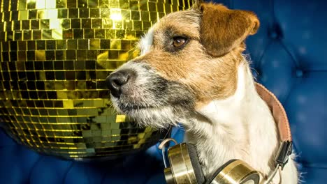 Dog-Gold-Disco-4K-05