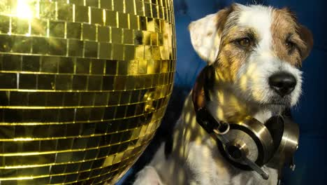 Dog-Gold-Disco-4K-07