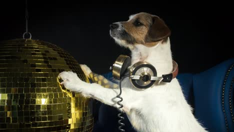 Dog-Gold-Disco-4K-08