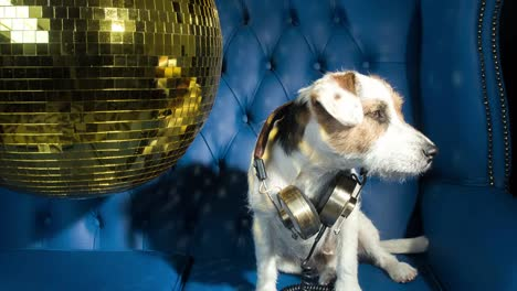 Dog-Gold-Disco-4K-10