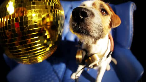 Dog-Gold-Disco-4K-13