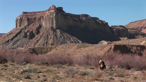 A-Cow-Grazes-At-The-Base-Of-A-Mesa-In-The-Desert-Southwest