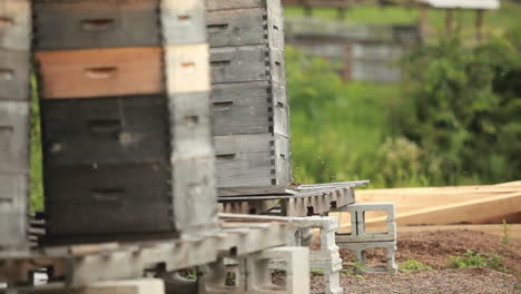 Beekeeper-boxes-in-a-garden