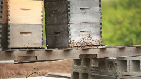 Beekeeper-boxes-in-a-garden-1