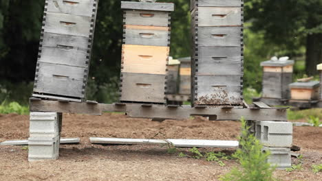 Beekeeper-boxes-in-a-garden-3
