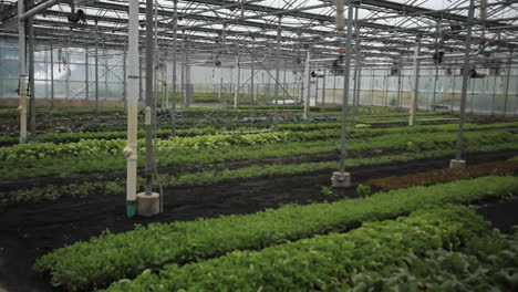 Interior-of-a-greenhouse