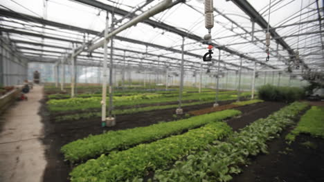 Soft-focus-shot-of-the-interior-of-a-greenhouse
