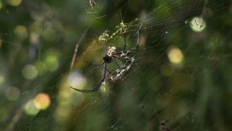 A-large-spider-spins-a-web-in-a-jungle-or-rainforest