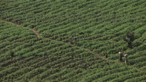 Birdseye-view-of-African-farmers-walking-across-a-field-on-the-border-between-Rwanda-and-Uganda