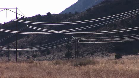 High-tension-wires-reflect-the-sun-as-they-stretch-across-a-desert-landscape