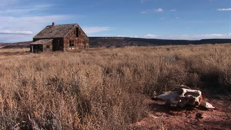 Medium-shot-of-a-cow-skull-in-the-brush-beside-an-abandoned-homestead