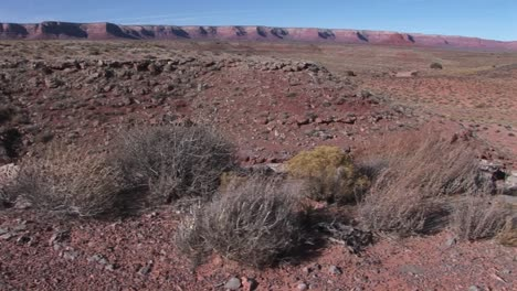 Crabright-slowly-through-a-desert-to-a-cow-skull-lying-in-red-dirt