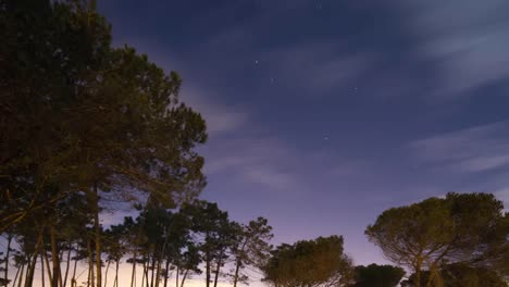 Portugal-Forest-Starlapse-4K-01