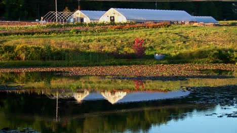 Greenhouses-near-a-field-and-body-of-water-at-sunset-in-Vermont