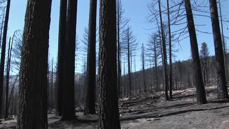 A-forestfire-with-felled-trees