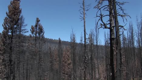 A-forestfire-with-felled-trees-1